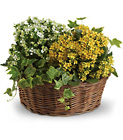 Basket of Joy from Boulevard Florist Wholesale Market